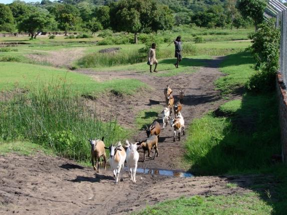Zu Fuß in der Nähe der Station am Kambiri Point unterwegs.