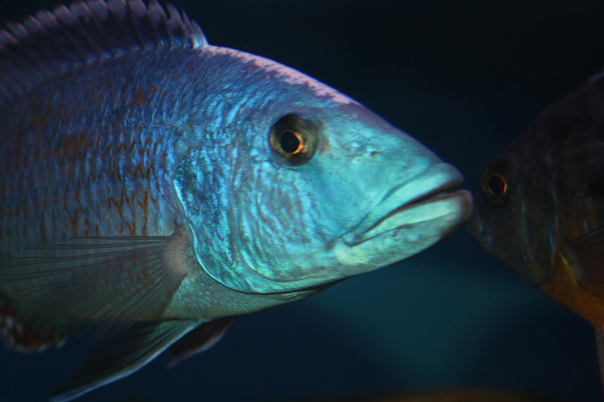 Aqua-Treff